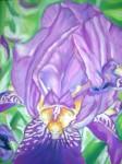 Art floral - Pastel : Iris Mauve