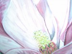Art floral - Pastel : Magniolia for ever